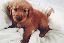 Puppies / Cuteness overload