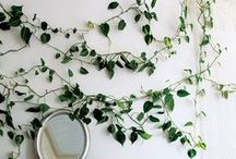 The Outdoors Indoors / Green, botanical inspiration.