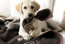 Pets / A delightful mix of adorable-ness and gifts for your pets!