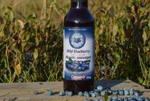 Health Benefits of Wild Blueberries / Unlike regular blueberries, these Wild Blueberries are not planted. They only grow wild, where mother nature put them. The harsh climate – and what it takes to survive in it – gives Wild Blueberries the high level of antioxidants and potent blueberry taste that regular blueberries can't match.