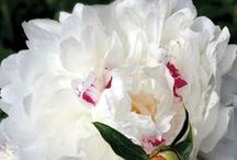 Květy // Bloom