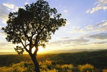 Central / The Waterberg Plateau, with its flambouyant brick-red sandstone formations and lush green vegetation presents an island of vibrant colour that can only be matched by the spirited people of the area.  / by Namibia Tourism Board