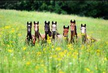 Horses & Ponies / <3