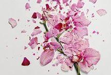 Lindsay Price / by Artforall