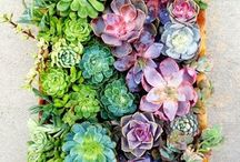 Gardens > Succulent Success