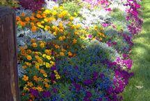 Gardens > Cottage