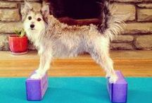 """Yoga Pets & Animals / Yoga Pets & Animals is a Yoga community board started by www.downdogboutique.com an online Yoga Clothing, Jewelry, Mats and Accessories store.  If you are interested in becoming a contributor to this or any of our Pinterest boards please e mail us at downdogboutique@gmail.com and we will send you an invitation. Please specify which board you are interested in or put """"all boards"""" Also suggestions for new boards are always welcome."""