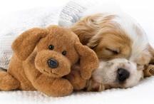 Sleep Toys | Uyku Oyuncakları / Sleep and toys | Uyku ve oyuncaklar