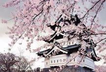 Nippon _ Japan _ Giappone