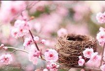 Wheel _ Ostara or Spring Equinox