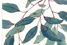 Illustration / watercolor illustration etc