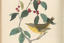 Sketch / Botanical art, visual guide for natural materials