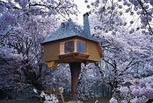 Spectacular Tea Houses / An Ouray of incredible/inspiration and eye catching Tea Houses around the world.