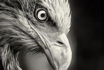 Birds close up