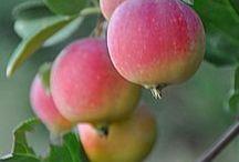 Apple - mela