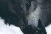 Wolfs <3