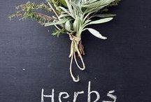   Plantes aromatiques et épices   / Tour d'horizon des diverses plantes et épices utilisées dans la fabrication des huiles essentielles.
