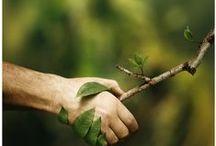   Écologie   / La Compagnie des Sens est actrice des enjeux écologiques de notre planète.