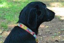 Shiawase Collar-7 Friends / 犬の首輪とリード しあわせカラー  https://www.shiawasecollar.com/    お客様のお写真