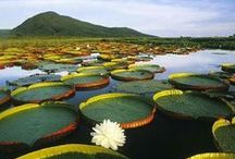 Estados do Brasil - Amazonas / Você conhece o Amazonas?