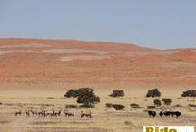 Namibia / Things and sites we encounter whilst riding our motorbikes in Namibia