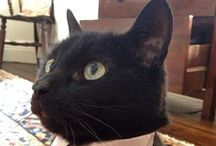 love black cats <3