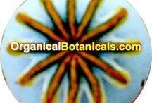 Rare, Exotic Botanicals | Seeds | Supplements | Specimens | Spices / OrganicalBotanicals.com - and more