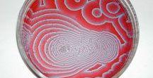 Cymatics, fractal, pattern