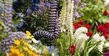Victorian Gardens Ideas ƸӜƷ Sg33❤¡¡¡ ✿ ❀¸¸¸.•*´¯`❀ ✿