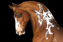 Theme: Horses / by Karin Mona Törnkvist