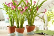 &CREATIVE POTS / DIY and craft projects to inspire you to bring more plants into your home