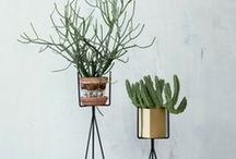 &HOME DECOR / How to make the most of plants in your home!