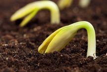 agricultura / Vida y pasión de los 365 días del año y de todos los años de mi vida !