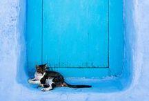 Portes bleues / Portes, couleurs, matières