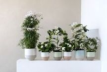&WHITE FRAGRANT PLANTS / White Fragrant Plants are the Houseplants of the month for March. Chic and elegant with white flowers that are pure 'haute florale' but also have their wilder side. Let yourself be seduced by these perfume plants.