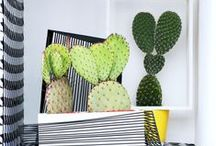 &CACTUS / A cactus brings a hint of the desert into your living room. The plant is ancient, rugged and surprising, thanks to its eye-catching shapes and flowers.