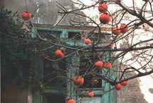 Season-autumn