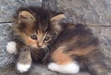 Adorable and Awesome Animals
