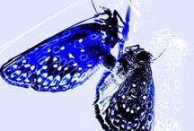 Artflakes - Fine Art Photography und Kunst  by Chris Berger at Artflakes.com / Fine Art Photography and Art by Chris Berger at Artflakes.com . Bestelle Bilder, Poster, Kunstdrucke bei ARTFLAKES. http://www.artflakes.com/de/shop/chris-berger/sets