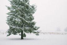 Winter ❄️