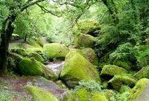 Entrez dans les Terres du Morbihan... / Des lieux authentiques et magnifiques quand je rentre dans les terres de Bretagne, moi qui vit au bord de l'océan atlantique ! Rochefort-en-terre, La Gacilly, Josselin, Brocéliande, les Mont d'Arrée, etc... http://leclosdumenallen.com
