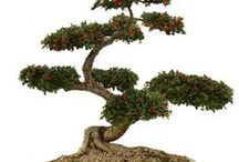 Bonsai / Bonsai trees & miniscapes / by Cindy Starling-Jenkins