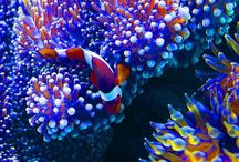 Underwater treasures / A collection of some of the most intriguing beautiful unusual marine creatures on our planet and all worth saving for the future of our world