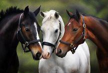 Horses...for Nan :)