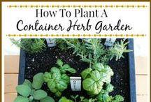 Gardens and Gardening  / by Margaret Carter