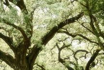 I Love Trees!