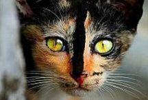 Cats & CO / ChAt  et ses cop- son univers