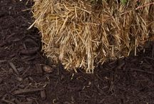 Growing / Straw Bale