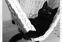 Cats & CO-DeSIGN + / Univers des chats et copains