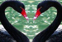 Tinkerjo Black Swan Wedding Inspiration